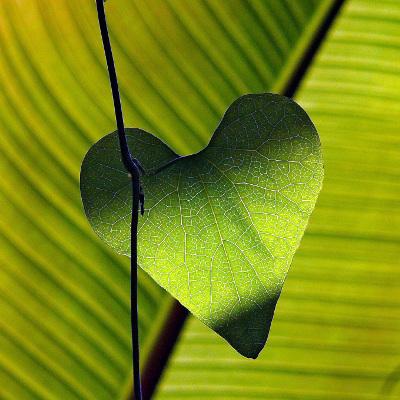 Vi arbejder på at skabe hjertevarme i Balance-Huset / Balancehuset - for at skabe det bedste resultat